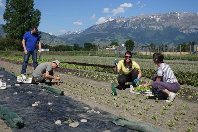 Von Bauernregeln und Wetterapps