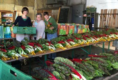 Gemüse Abpacken, Juli2015