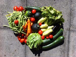 Gemüsetasche und Beipackzettel KW36