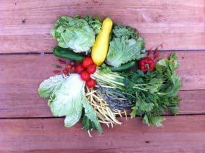 Gemüsetasche und Beipackzettel KW37