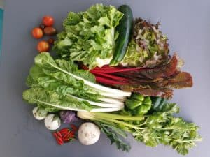 Gemüsetasche und Beipackzettel KW39