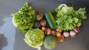 Gemüsetasche und Beipackzettel KW40