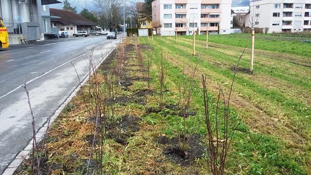 Obstbäume und Beerensträucher auf unserem Feld