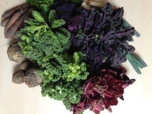 Gemüsetasche und Beipackzettel KW14