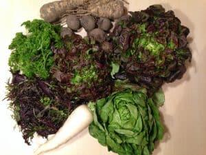 Gemüsetasche und Beipackzettel KW 19