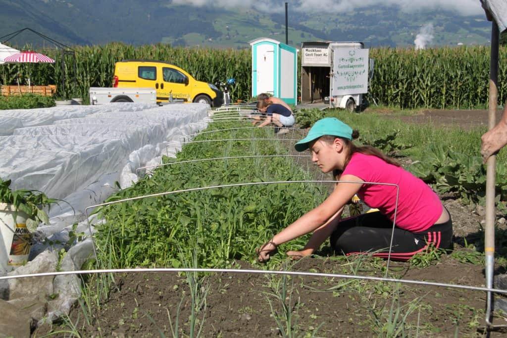 Kinderarbeit bei der Gartenkooperative: Die Böhnli-Regelung