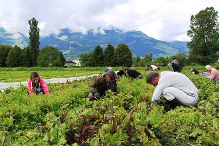 Stellenangebot GemüsegärtnerIn 60%