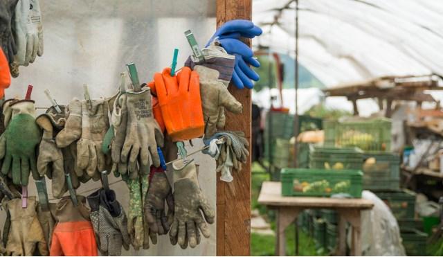 Kooperationsstelle für solidarische Landwirtschaft