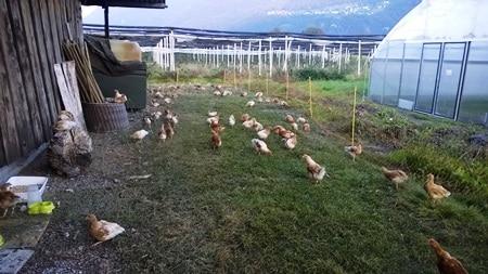 Unsere Eier kommen wieder vom Weidriethof